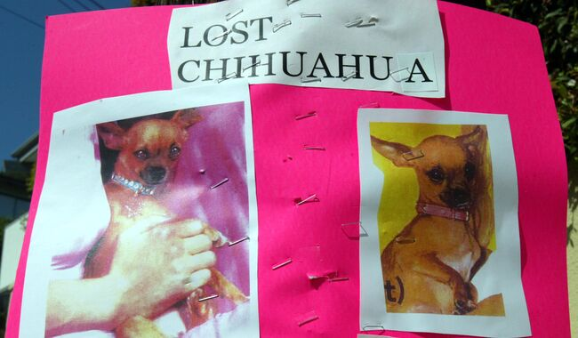 Paris Hilton Lost Dog Poster