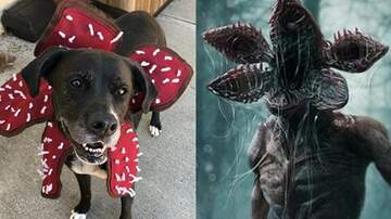 Reid - 'Stranger Things' Demogorgon Dog Costume Is Here & I Need It Right Now