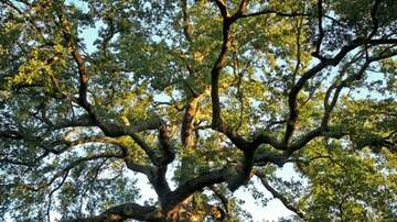 The Afternoon News with Kitty O'Neal - Sac Tree Foundation  Offers Sac County Residents Free Shade Trees