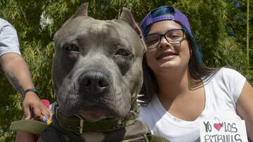 Colorado's Morning News - Time to End Aurora Ban on Pit Bulls?