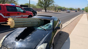 BC - Driver Unharmed After Cactus Crashes Through Car Windshield