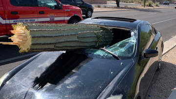 Weird News - Impaired Driver Survives After Giant Cactus Pierces Windshield In Arizona