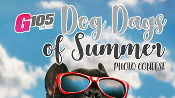 Contest Rules - Dog Days of Summer