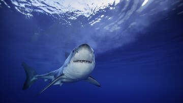 Local News - Barnstable County Commissioners To Vote On Shark Detection Plan