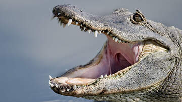 National News - Police Warn Flushing Drugs Down The Toilet Could Create 'Meth-Gators'