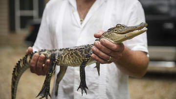 The Pursuit of Happiness - Police: Flushing Drugs Down Toilets Creates Meth-Gators