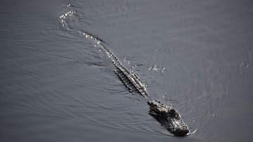 The Bushman Show - Meth-Gators