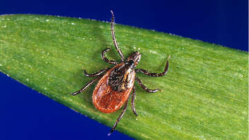 National News -  Lawmakers Order Pentagon To Admit If It Experimented With Weaponized Ticks