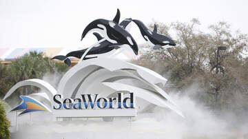 Tim Conway Jr - SeaWorld Extends Free Ticket Offer for Military Veterans