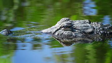 Raven - Police Warn Of 'Meth Gators' In Tennessee