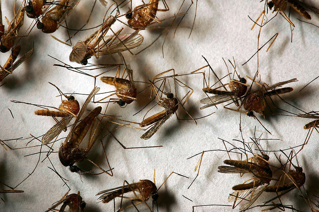 West Nile Virus tested positive in two local parks