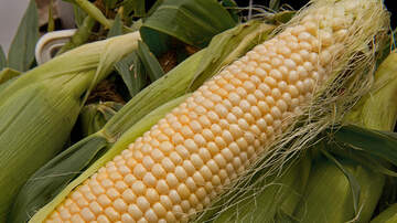 Dana McKay - Is the Heat Causing Corn to Pop in Montgomery County?