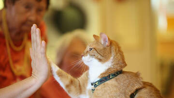 Lulu Y Lala - NY Becomes First State To Ban Declawing Of Cats