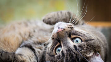 Bob Lonsberry - LONSBERRY: Of Cats, Claws and Balls