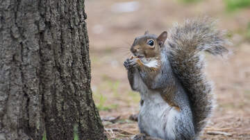 Sarah the Web Girl - Two Protestors Fined For Eating Raw Squirrels at Vegan Market