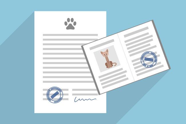 Pet adoption contract and cat passport