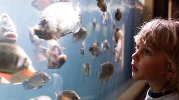 Sara Jean - Blue Zoo Spokane set to open August 1st!