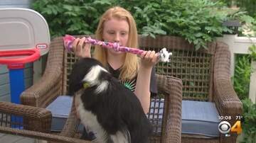 Laura KBPI - Denver teen needs help finishing treat bags for rescue dogs