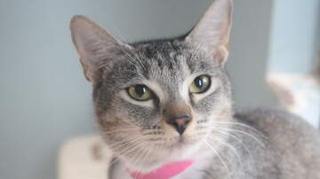 None - LCHS Pet of the Week: Tinkerbell