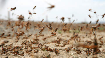 Marco - GRASSHOPPER SWARM IN LAS VEGAS PICKED UP ON RADAR