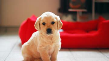 Chuck Britton - So, God Made a Dog.....