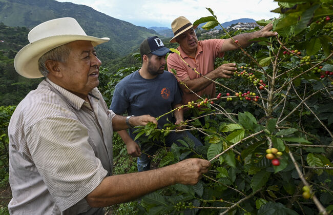 COLOMBIA-COFFEE-CRISIS