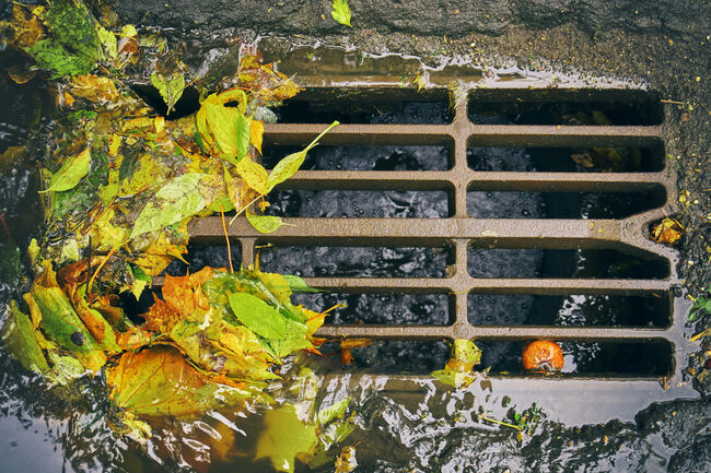 Sewer grate with fallen leaves after autumn rain
