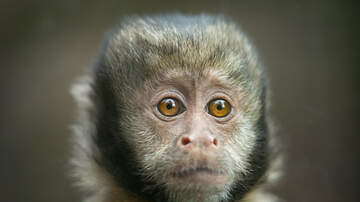 Toby Knapp - #SCIENCE: They've made a HUMAN-MONKEY embryo, you guys...