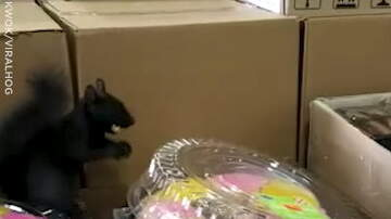 Hitman - Shoppers are Surprised with Squirrel in the Store!