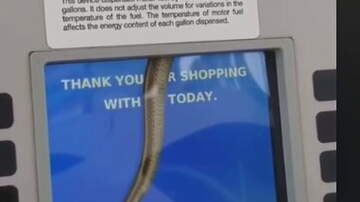 Hitman - Snake Spotted Inside a Touch Screen at a Gas Pump