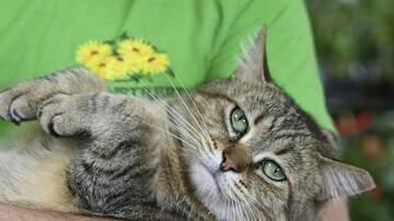 WMT Local News - North Liberty addresses pet population
