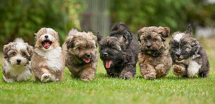 Cleveland Browns find homes for puppies | Newsradio WTAM 1100