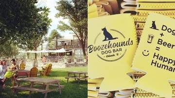 Tim Ben & Brooke - There Is Now A Dog Park & Bar Hybrid Called Boozehounds & It's Perfect