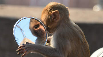 Ashley Nics - Is This Really How Mirrors Are Made?