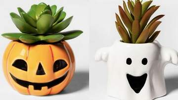 Tim Ben & Brooke - Target Is Now Selling Spooky Halloween Succulents For Only $4 Or Less