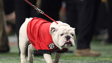 Blaine - Sports Illustrated Has Named College Football's Best Mascot