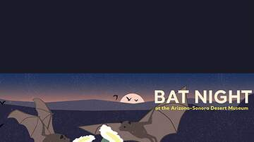 None - Cool Summer Nights - Bat Night
