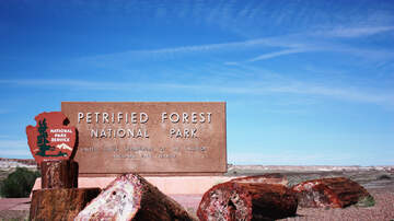 iHeartRadio Podcasts - Parklandia Explores The Tree-sures Of The Petrified Forest National Park