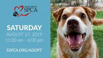 The Afternoon News with Kitty O'Neal - This Saturday Clear the Shelters Day with Reduced or Waived Adoption Fees