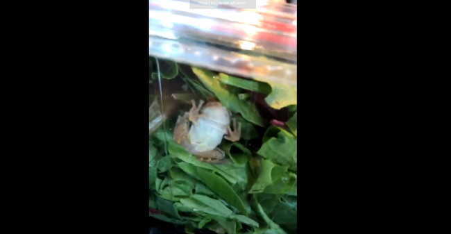 live frog found in salad container