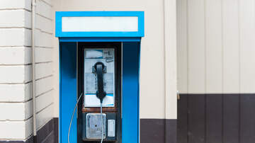 Kala - A Payphone in Maryland Makes Bird Calls Instead of Phone Calls!