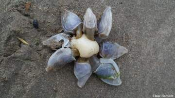 Coast to Coast AM with George Noory - 'Alien' Creature Found on British Beach