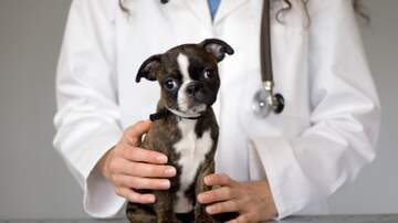 Andi and Kenny  - Berks ARL Sees Recent Increase in Parvovirus Dogs