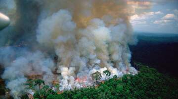 Paul Kelley - Catastrophic Fires In Amazon Rainforest Put The Worlds Oxygen In Danger