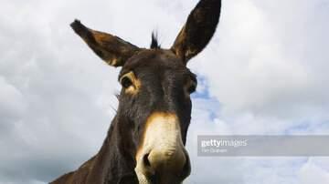 Jose Valenzuela - ¡Increíble!: Encarcelan a un burro en México