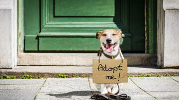 Pet Country - Top 10 Benefits of Adopting a Rescue Dog