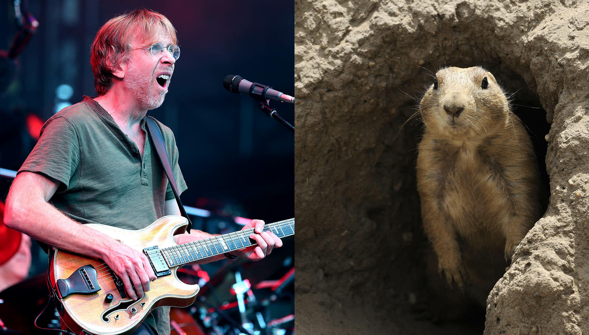 Phish Phans Barred From Camping Due To Prairie Dog Plague In Colorado