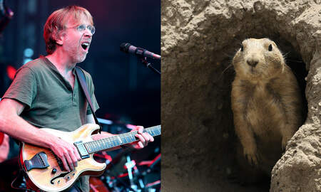 National News - Phish Phans Barred From Camping Due To Prairie Dog Plague In Colorado
