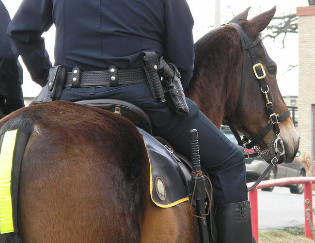 NOPD Horse Walks Into Bar As Band Plays 'Old Town Road'