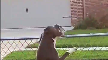 The Woody Show - Gentle Dog Makes Friends with Neighborhood Bird